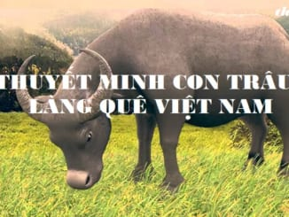 thuyet-minh-ve-hinh-anh-con-trau-lang-que-viet-nam-678