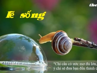 suy-nghi-ve-le-song
